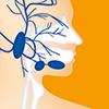 Speicheldrüsen, Nervus facialis
